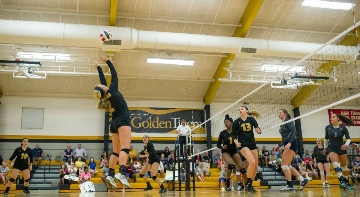 Photo for Volleyball Receives Postseason Honors
